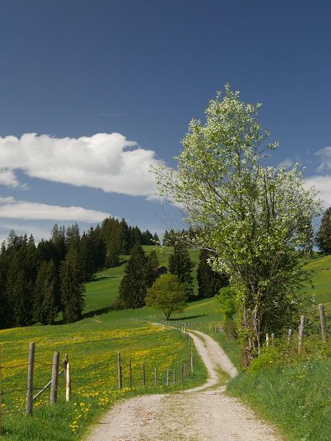 Wanderweg durch das frühlingshafte Allgäu bei Oy-Mittelberg