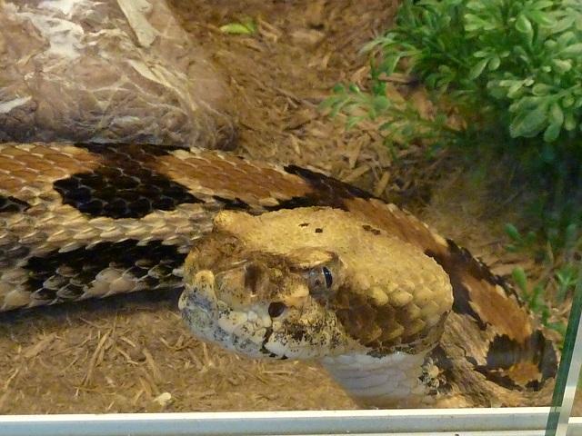 Schlange im Reptilienzoo Scheidegg