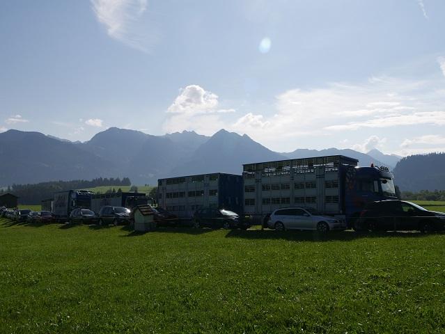 Viehtransporter bei Bolsterlang