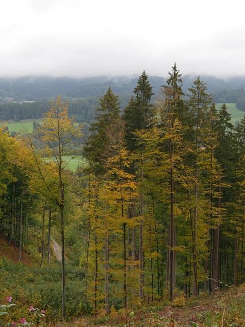 Herbstwald bei Kleinweiler im Oberallgäu