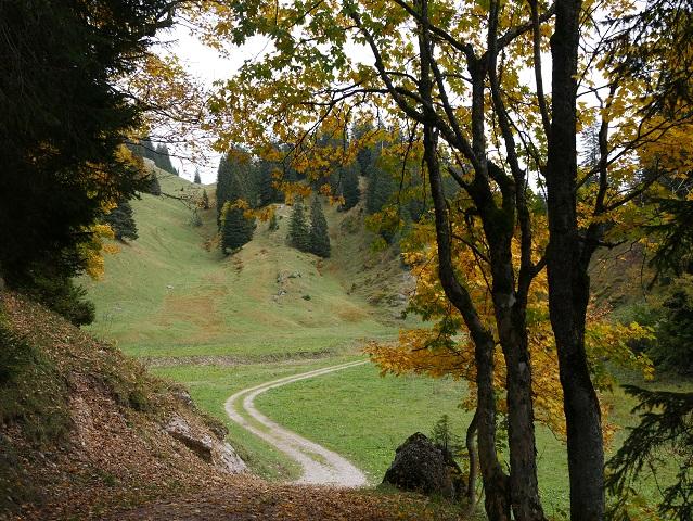 Weg von der Dietle-Alpe zur Scheidwangalpe im Gunzesrieder Tal