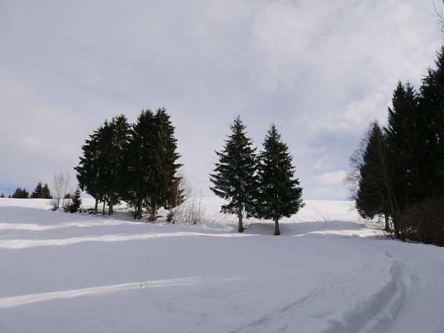 Wanderweg zur Alpe Sonthofer Hof im Winter