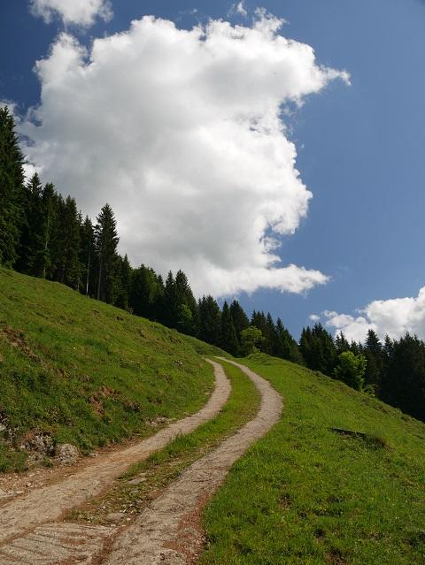 Aufstieg von Schlipfhalden Richtung Gierenkopf