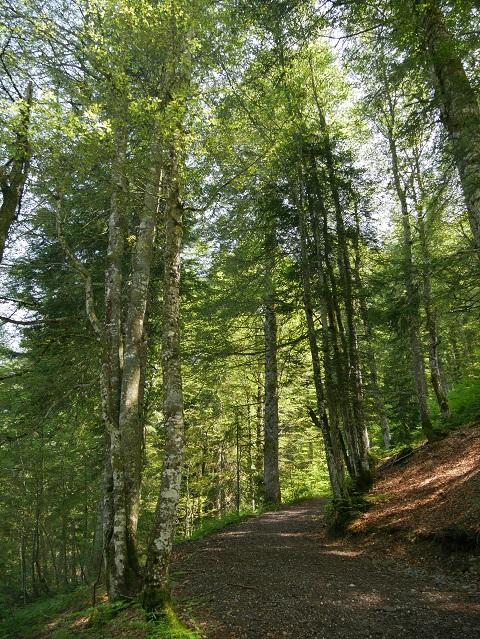 Auftsieg durch den Wald zum Hochschelpen