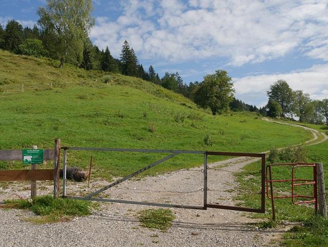 Beginn des Aufstiegs von der Alpe Schneidberg zur Thaler Höhe