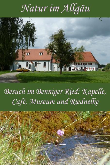 Besuch im Benninger Ried bei der einzigartigen Riednelke