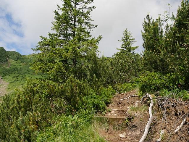 Bergtour aufs Steinmandl - Aufstieg über Stufen