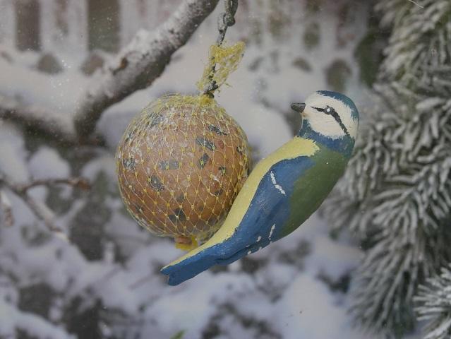 Blaumeise im Schaukasten auf dem Vogellehrpfad Friesenried