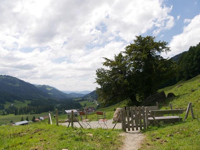 Alte Eibe bei Balderschwang