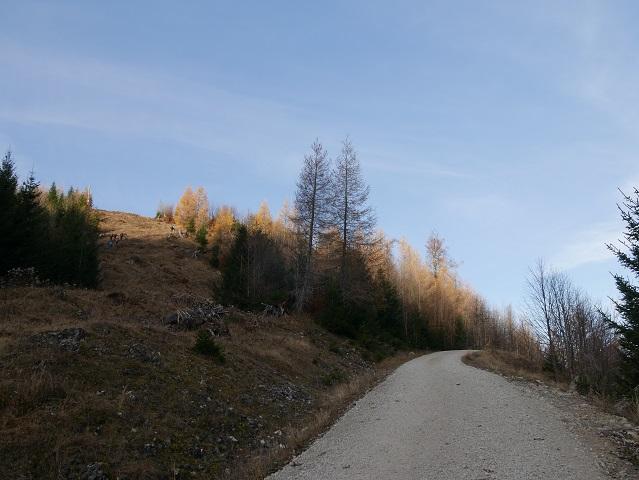 Forstweg auf den Schönkahler