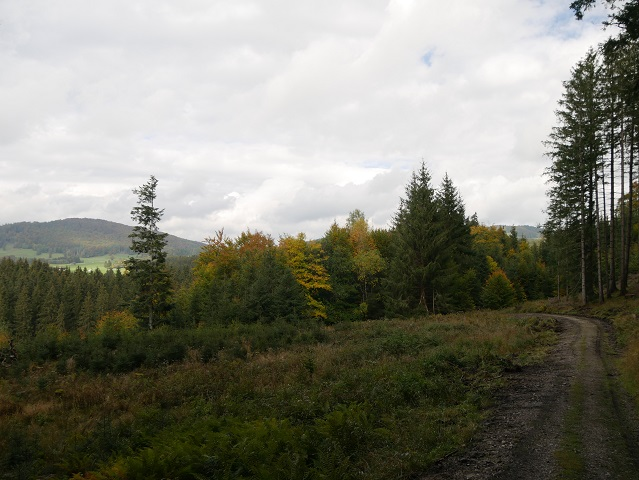 Herbstwald bei Hopfen