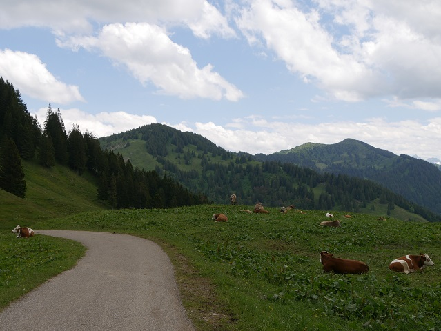 Alpweide oberhalb von Balderschwang