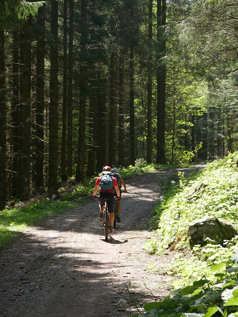 Radler im Bergwald