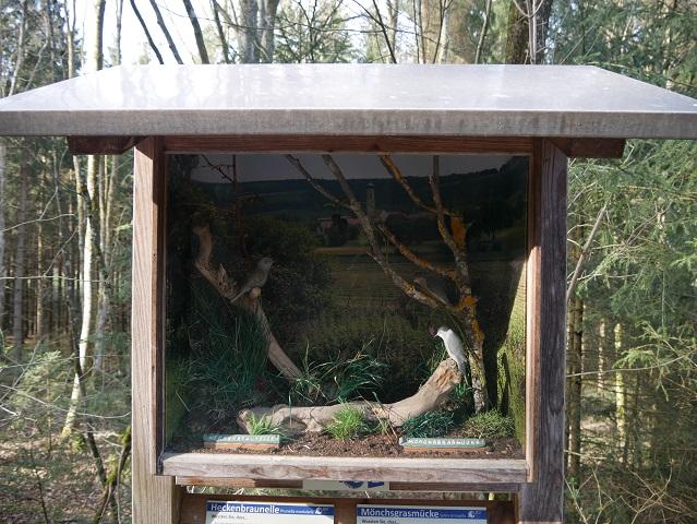 Schaukasten 1 am Vogellehrpfad Friesenried