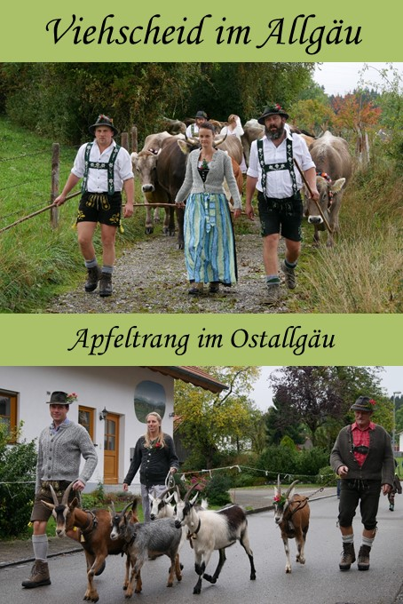 Viehscheid in Apfeltrang im Ostallgäu