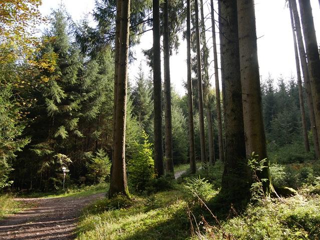 Waldweg bei Enzensberg