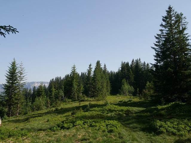 Wanderweg vom Hochschelpen Richtung Österreich