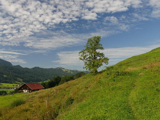 auf dem Weg zur Alpe Schneidberg
