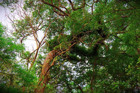 Mae Sa Waterfalls Weird Tree