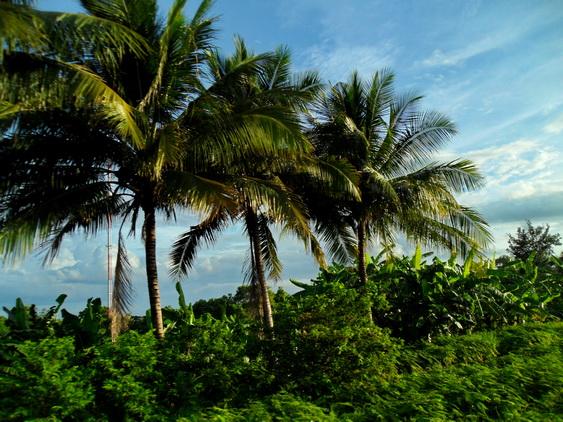 Hua Hin to Bangkok Train Palm