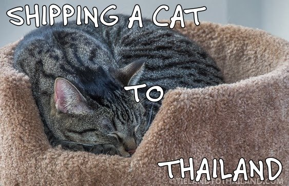 Shipping a Cat to Thailand - Tieland to Thailand