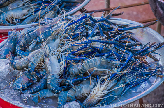 Shrimp at Rong Kluea Market