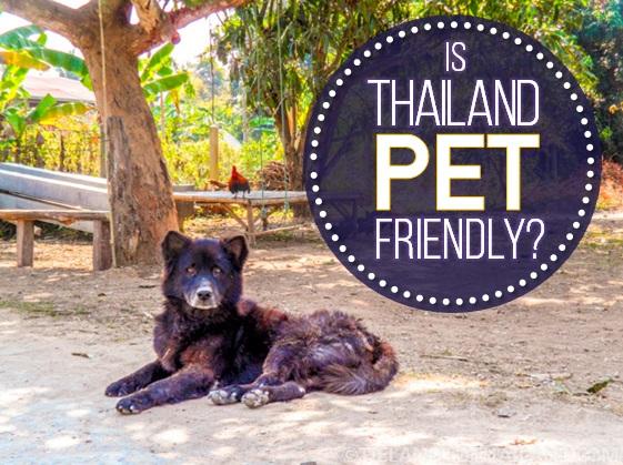 Is Thailand Pet Friendly? - Tieland to Thailand
