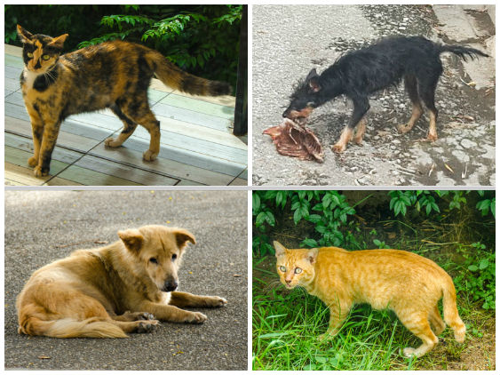 Stray Dogs and Cats in Thailand
