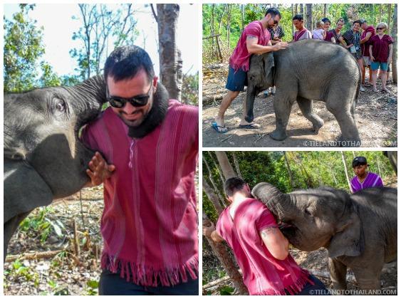 Baby Elephant Playing at Ele[hant Jungle Sanctuary