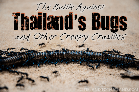 The Battle Against Thailand's Bugs
