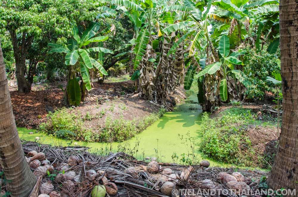 Trip to Samut Songkhram: Bang Plub Orchard