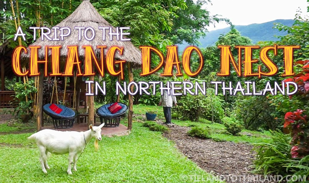 Chiang Dao Nests 1 and 2 in Northern Thailand