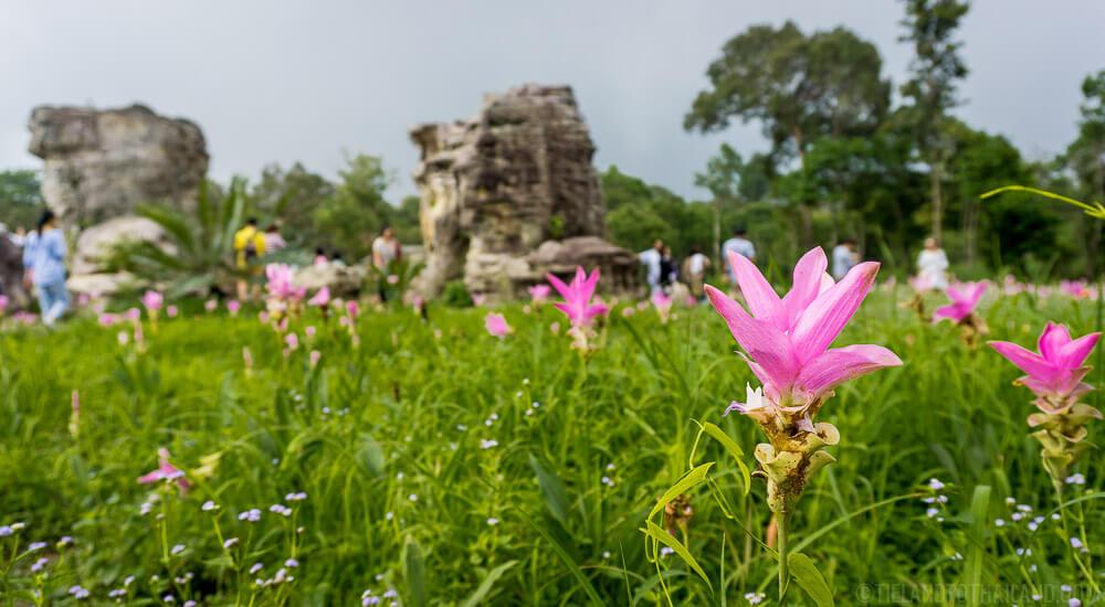 Dok Krachiao Nature Trail