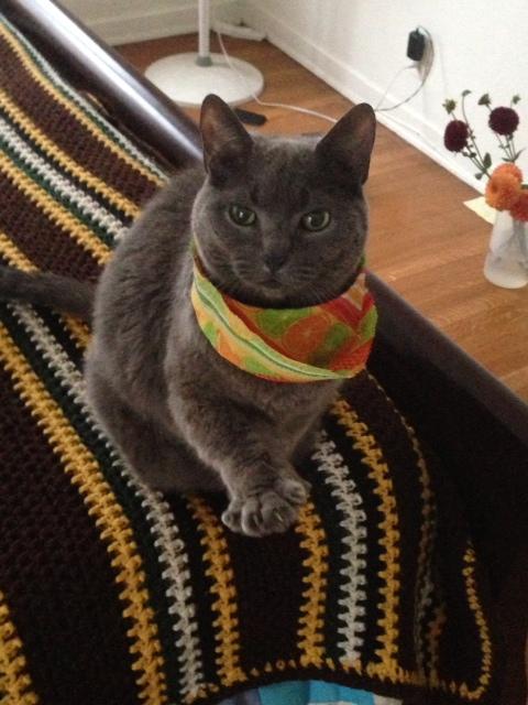karma-kitty-in-thailand