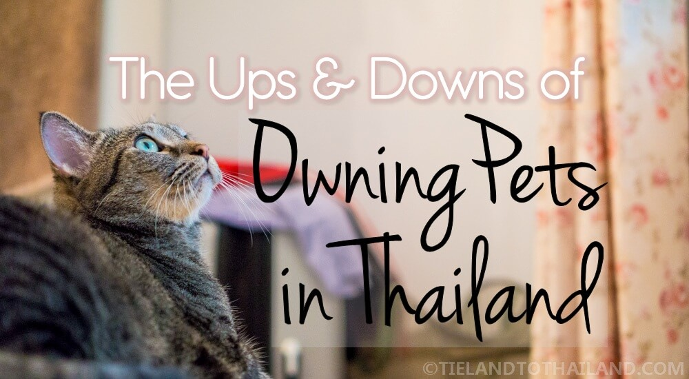 Ups and Downs of Owning Pets in Thailand Tieland to Thailand