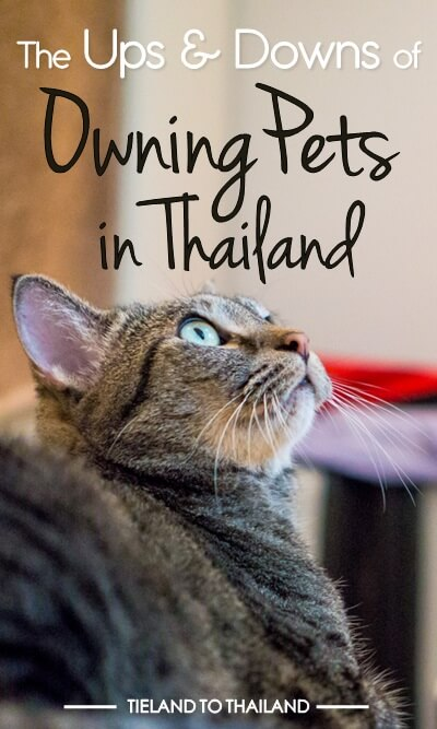 The Ups & Downs of Owning Pets in Thailand