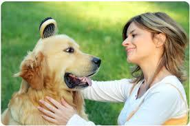 10 señales a analizar antes de adoptar un perro