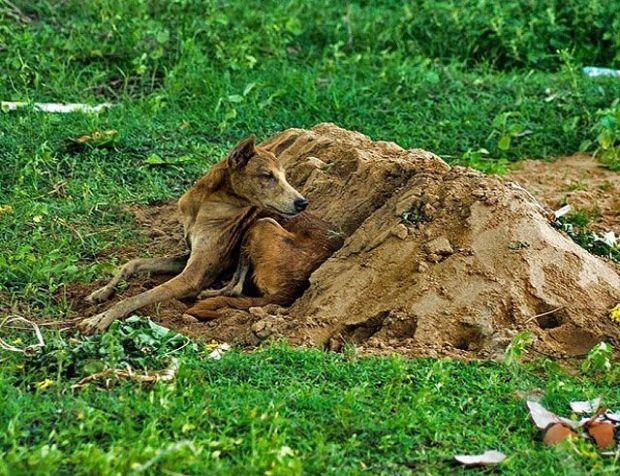 Tommy, un perro que acompaña a su amigo en la tumba