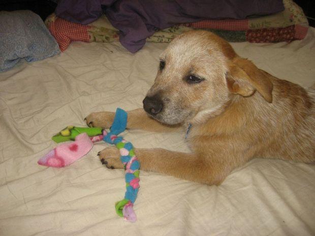 Día de los animales perro con juguete