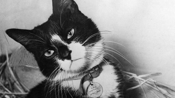 gato-simon