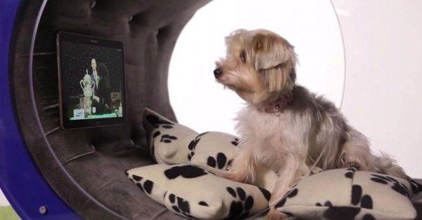 dream-doghouse