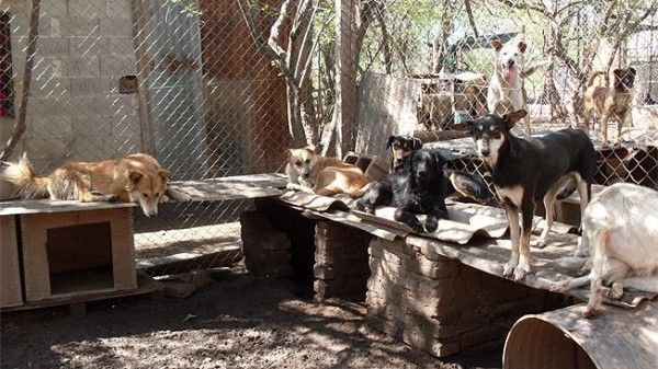 perro-callejero