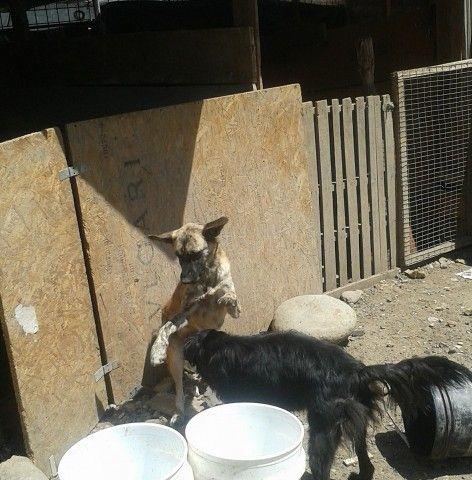 Refugios, una labor que solo entenderán los amantes de los perros