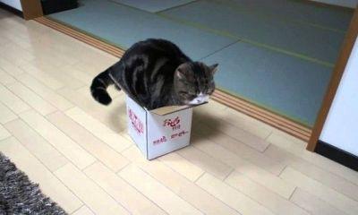 gato maru