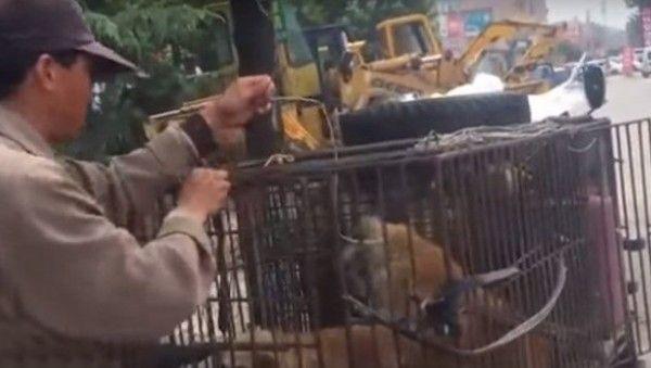 Maltrato animal: hombre llena con agua a un perro lastimado para venderlo en un restaurante