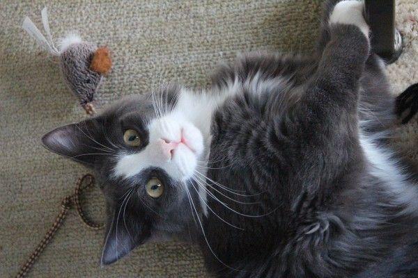 Cómo hacer que tu gato no dañe las cortinas o los muebles sin maltratarlo