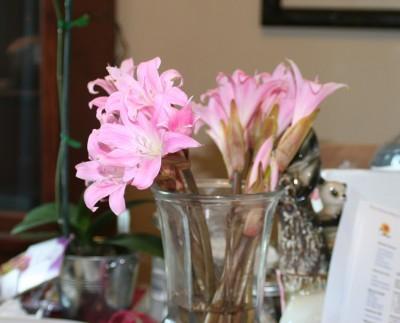 The subject, a vase of fragrant amaryllis