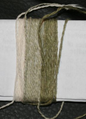 natural, sage, and olive colorgrown cotton yarns, after simmering in soap and soda ash solution