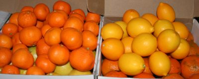 Satsuma mandarins and Meyer lemons!