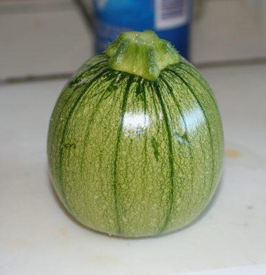 first zucchini!
